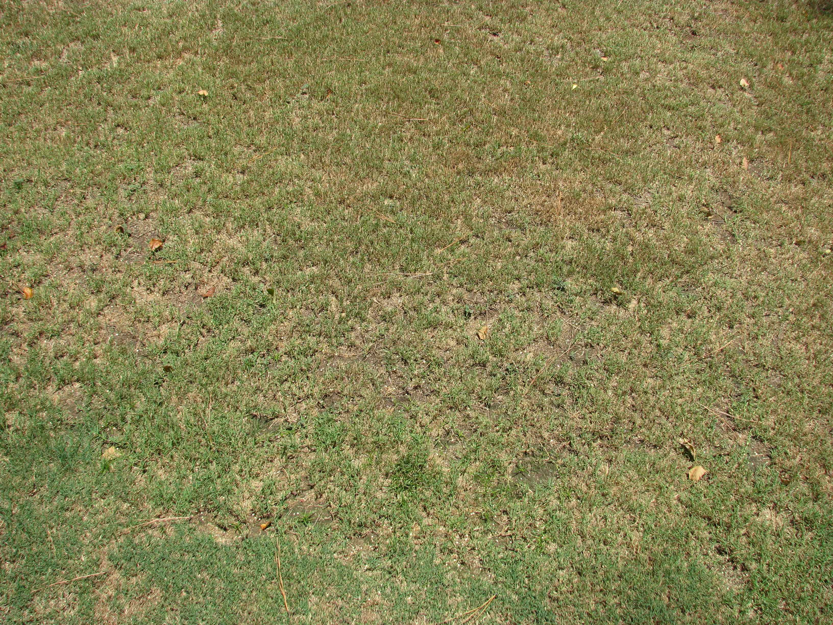 Sedge and Nutgrass Experiment - No Perceptible Change in the